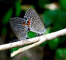 butterflies by wistine