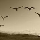 Flying Formation by Corri Gryting Gutzman