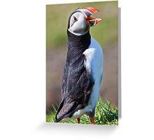 Cockadoodledoo Greeting Card