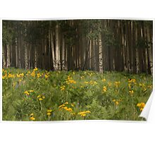 Flowers and Aspens trees on the San Francisco Mountain Peaks. Poster