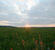 Prairie scene in Arkansas.  by mikepemberton
