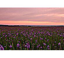 Prairie scene in Arkansas.  Photographic Print