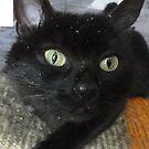3 cheers for Cat-Nip by neon-gobi