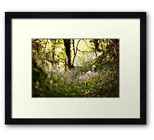 Sitting in the forest Framed Print