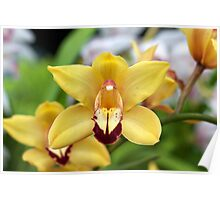 Yellow Orchid - NYBG Orchid Show 2011 Poster