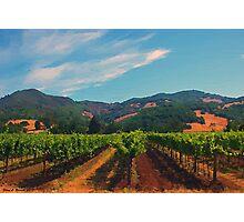 California Vineyard Photographic Print