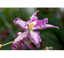 Purple Orchid - NYBG Orchid Show 2011 Photographic Print