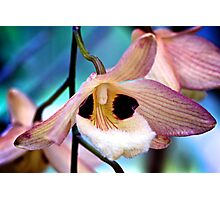Pink & White Orchid - NYBG Orchid Show 2011 Photographic Print