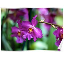 Purple Orchid - NYBG Orchid Show 2011 Poster