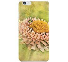 Beetle on the Strawflower iPhone Case/Skin