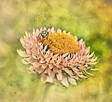 Beetle on the Strawflower by Scott Mitchell