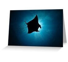 Manta Silhouette-flying past the sun at noon Greeting Card