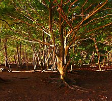 Na Pali Trail, Maui - HAWAII by Atanas Bozhikov NASKO