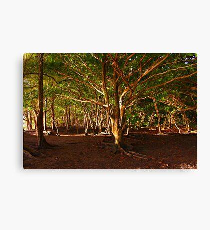Na Pali Trail, Maui - HAWAII Canvas Print