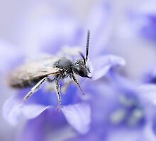 Andrena by Annora Ayer