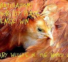 Baby Wildlife Of The World Banner by AndreaEL