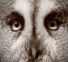 I am looking at you by Matt Sillence