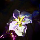 Iris Delight by John Taylor