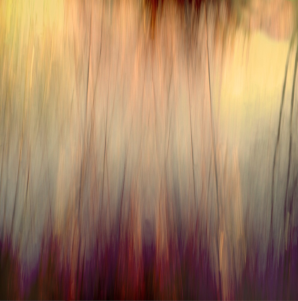 woodlands by jamesataylor