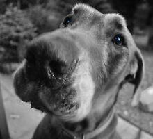 Scooby-blue by hetsbets