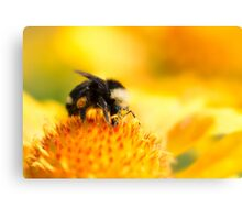 Bumblebee on Gaillardia Canvas Print