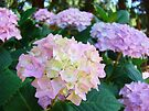 Floral Pink Hydrangea Flower Green Garden by BasleeArtPrints
