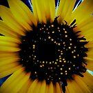 Sunflower by Loretta Marvin