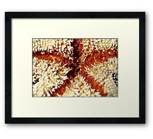 Anatomy of a Starfish Framed Print