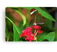 Flower Glasswing - Greta Oto Canvas Print