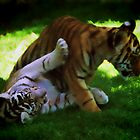 Tiger Cubs at Play by John Taylor