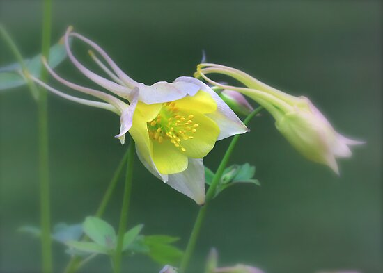 Delicate Beauty by Lori Deiter