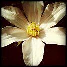 Simple Beauty by Krystal Iaeger