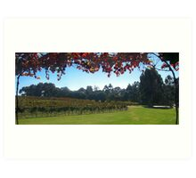 Margaret River Winery views Art Print