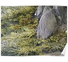 seaweed and rocks Poster
