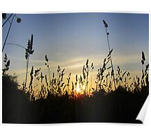 Sunset Thru the Hayfield... Poster
