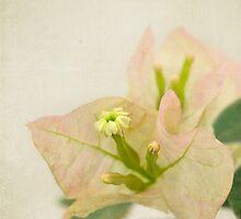 Delicate paper flower by Celeste Mookherjee