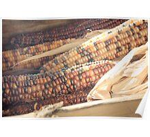 Indian Corn. Poster