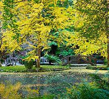 Autumn, Alfred Nicholas Memorial Gardens, Victoria, Australia. by johnrf
