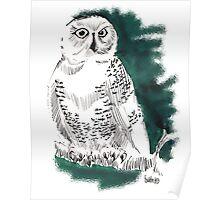 Snow Owl II  Poster