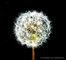 Dandelion Sparkle by ingridthecrafty