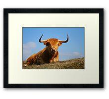Red Highland Framed Print