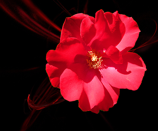 Rouge by Mistyarts