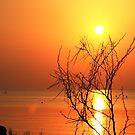 Sunrise over the bay... by guppyman