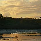Evening Wetlands by byronbackyard