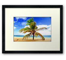 Palm Tree, San Juan, Puerto Rico Framed Print