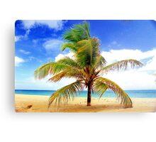 Palm Tree, San Juan, Puerto Rico Metal Print