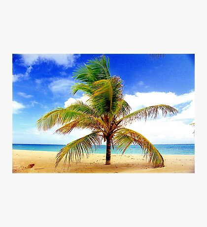 Palm Tree, San Juan, Puerto Rico Photographic Print