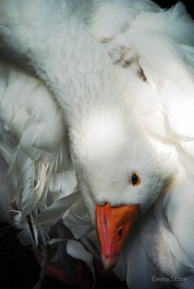 Mother (Snow) Goose by Emma Stone