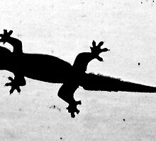 stuck on you hoi an - vietnam lizard gecko silhouette shado abstract natural by Kane Horwill