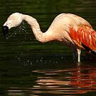 """Shake it off"" - Bathing Flamingo by steppeland"